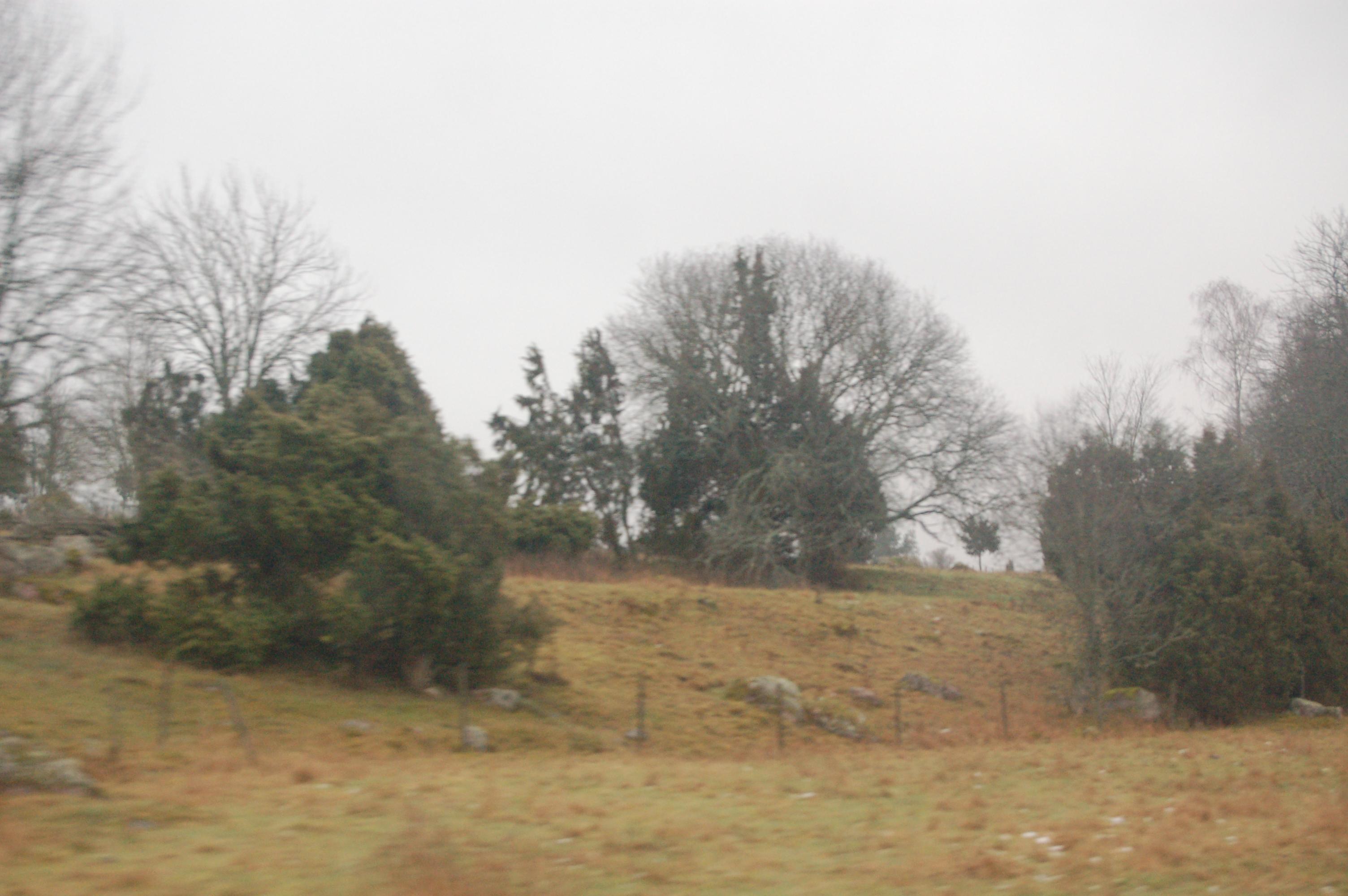 Skogsbacke 2007