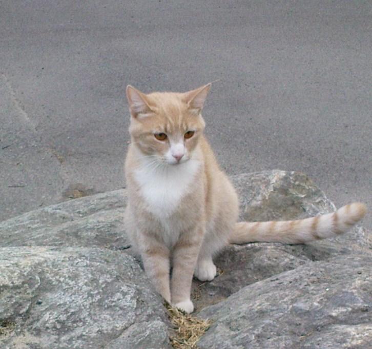 Katt 2009